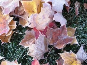 LeavesFrost